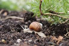 Schnecken Im Garten Loswerden 9 Wirksame Hausmittel