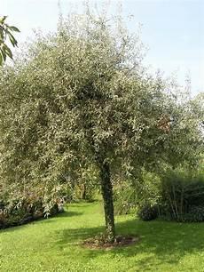 baum kleiner garten hausb 228 ume f 252 r kleine g 228 rten outdoor garden plants und