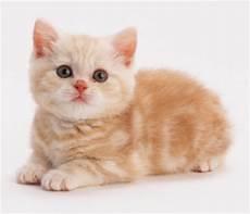 Jenis Kucing Adearisandi S