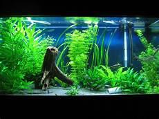 Aquarium Decorations World Of Colors Interior