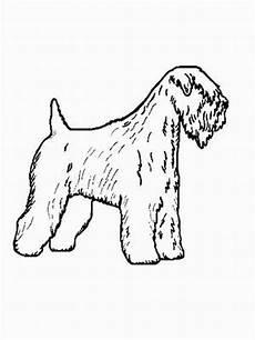 malvorlagen hunde gratis hund soft coated terrier ausmalbild malvorlage hunde