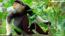 10 Monyet Paling Lucu Dan Mengagumkan Di Dunia