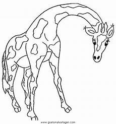giraffen 42 gratis malvorlage in giraffen tiere ausmalen