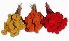 kinderküche zubehör selber machen trockenblumen zum basteln grab gestecken kaufen