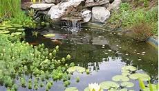 installation guide outdoor pond encyclo fish