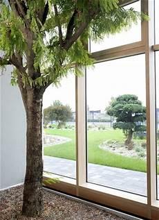 baum im raum solit 228 rpflanzen gro 223 pflanzen indoor outdoor kaufen