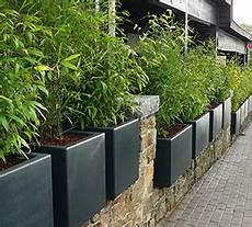 grande jardinière pour bambou bambous en pots et bacs int 233 r 234 ts et esp 232 ces adapt 233 es