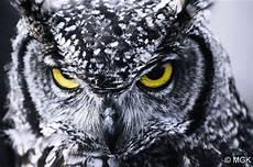 Meh Tengok Gambar Gambar Burung Hantu Yang Comel Dan