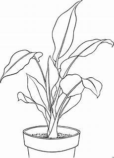 Ausmalbilder Pflanzen Blumen Schoene Pflanze Ausmalbild Malvorlage Blumen