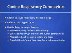 new coronavirus cdc