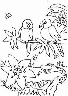 ausmalbilder papagei ausdrucken ausmalbilder
