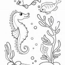 ausmalbilder malvorlagen algen ausmalbilder malvorlagen algen kostenlos zum ausdrucken