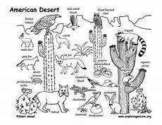 animals in the desert coloring pages 17026 pin by erin testa on chec year 2 science desert drawing desert biome desert diorama