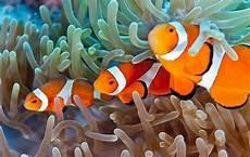 Berkenalan Dengan 10 Hewan Laut Dalam Animasi Finding