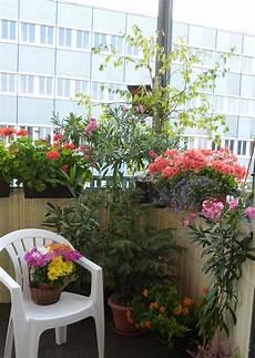 sommer auf dem balkon sommer auf dem balkon tipps f 252 r eine gr 252 ne oase