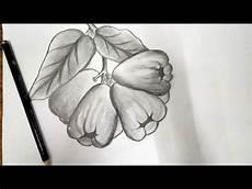 Belajar Gambar Buah Jambu Air Menggunakan Pensil