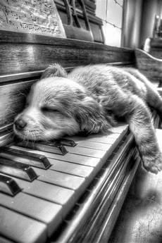 apprendre piano seul apprendre le piano seul machronique