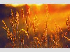 sunshine wallpaper   HD Desktop Wallpapers   4k HD