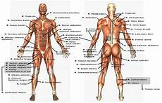 Anatomi Dan Faal Dasar Pmr Madya Smpn 1 Bondowoso