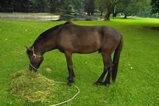 Kuda Dari Warga Untuk Jokowi Ditetapkan Jadi Milik Negara