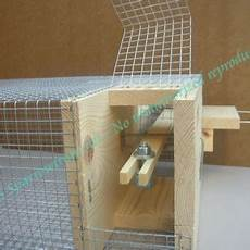 house sparrow trap plans the trap sparrowtraps net