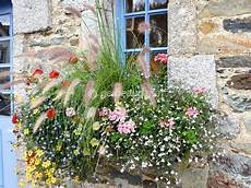 title avec images plante pour jardiniere fleur