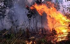 Akibat Kebakaran Hutan Yang Menimbulkan Banyak Kerugian