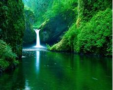 Nature Wallpaper Green