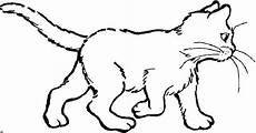 malvorlage baby katzen katzen malvorlagen malvorlagen1001 de