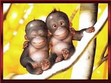 Monkey Gif By Sehabatku Photobucket