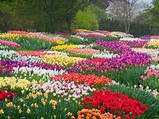 why you re sneezing the most beautiful flowers in bloom this spring photos cond 233 nast traveler