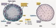 Struktur Anatomi Daun Tumbuhan Dikotil Dan Monokotil