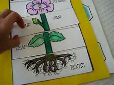 plants lesson ks1 13726 grade 1 science parts of plant activities and roots leaf bud stem petals and