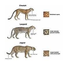 jaguar where do they live jaguar