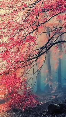 Iphone Nature Lock Screen Beautiful Wallpaper