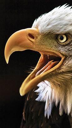 iphone black eagle wallpaper hd eagle iphone wallpaper hd