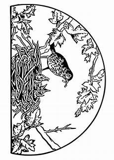 malvorlage vogel im nest malvorlage vogelnest ausmalbild 19453