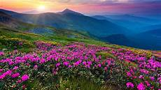 Flower Valley Wallpaper by Mountain Flower Live Wallpaper Android Apps On Play