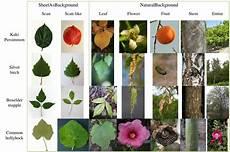 plant identification 2013 imageclef lifeclef
