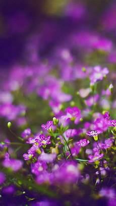 iphone purple flower wallpaper beautiful purple flower field blur bokeh iphone 6