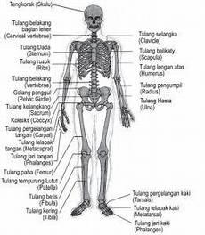 Hasil Gambar Untuk Gambar Anatomi Tubuh Manusia Lengkap