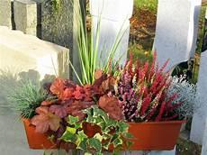 Balkonkasten Herbst Winter - bepflanzter balkonkasten 60 cm wintergr 252 n im