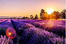 Ein Wohlriechendes Zauberkraut Lavendel Gegen Motten