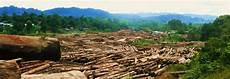 Penebangan Hutan Dan Perburuan Liar Riensetiawan