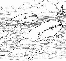 coloring pages for sea animals 17487 116 best images about nim s island ideas for teaching groups on