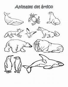arctic animals printable coloring pages 17219 picture animaux polaires animaux sauvages ours polaire