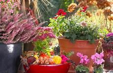 Balkonpflanzen Herbst So Machen Sie Den Balkon Fit F 252 R