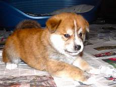 chiot a donner montpellier chiot a donner montpellier chien bonheur