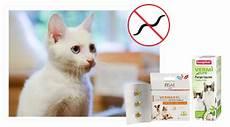 produit anti puce chaton anti puces chat et chaton produits antiparasitaires pour chat