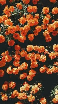 Orange Flowers Iphone Wallpaper by Madisondaniel2 In 2019 Orange Wallpaper
